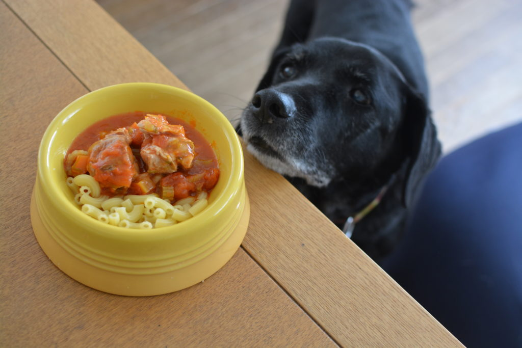 犬の手作りごはん「鳥もも肉とトマトの煮込み」